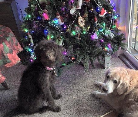 Emmy & Lady & tree 2017