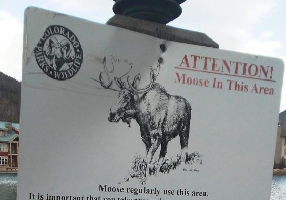 Moose in area RS from Eric Sprinkle